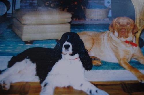 Brody & Lindy