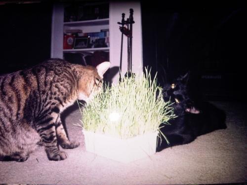 Tubby & Chubbie