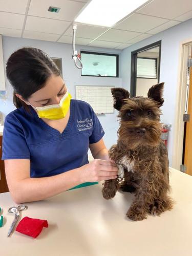 Veterinary Nurses 5
